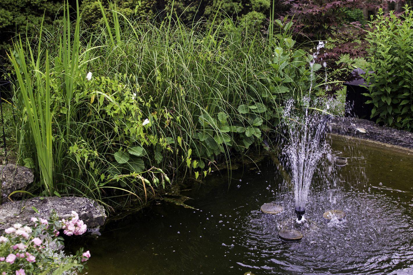Ökosystem Gartenteich – Aufbau und Erhaltung