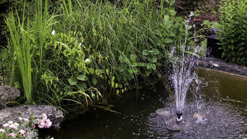 Kosystem gartenteich aufbau und erhaltung for Gartenteich einsatz